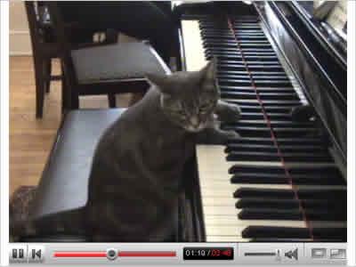 名ピアニスト 演奏ネコのイメージ画像