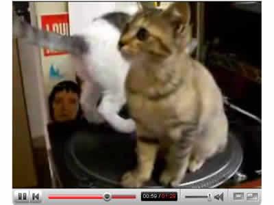 ターンテーブル猫兄妹