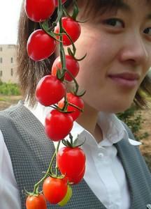 人気上昇中の「トマトベリー」―埼玉